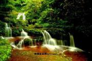 赤水桫椤国家自然保护区