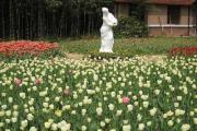 南京中山植物园
